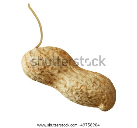 Single peanut in the pod isolated on white