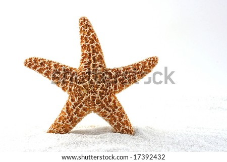 single starfish in white sand with room for copy
