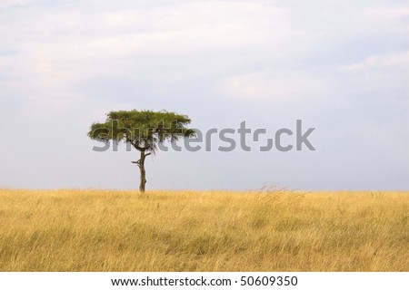 Single tree in the middle of vast African grass plains.