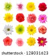 sixteen mix flower isolated on white background - stock photo