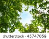 sky in deep forest - stock photo