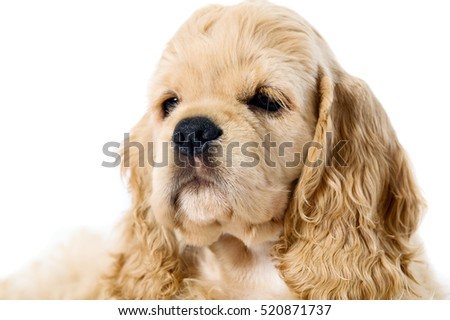 Sleeping puppy dog on a white background