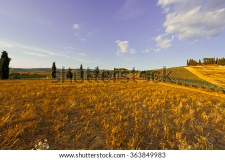 Sloping Hills of Tuscany in the Autumn