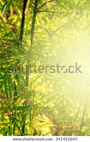 Small Bamboo Forest with Soft Light.