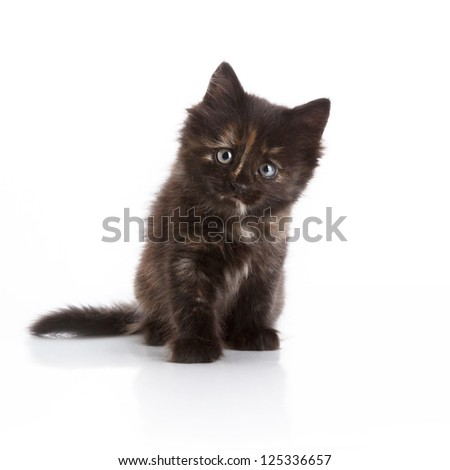 Small black kitten sitting on white background looking at camera