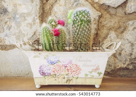 Small blooming cactus in colorful pot on wooden table