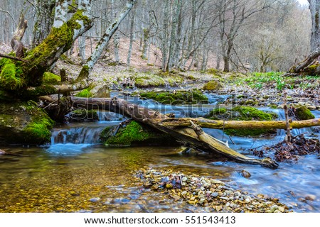 small blue river flow through a forest