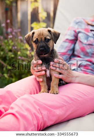 Small Brown and Black Terrier Mix Puppy Relaxing on Lap