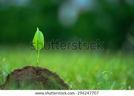 Small green plant starting to grow from the pure eco soil over the green grass background