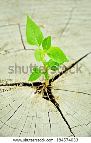 Small green seedling growing from tree stump - regeneration and development concept