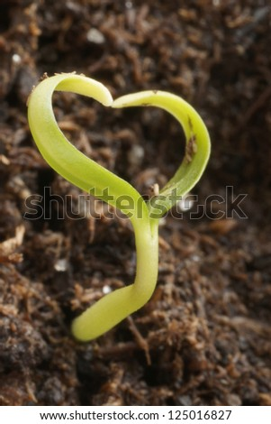 small heart shape plant
