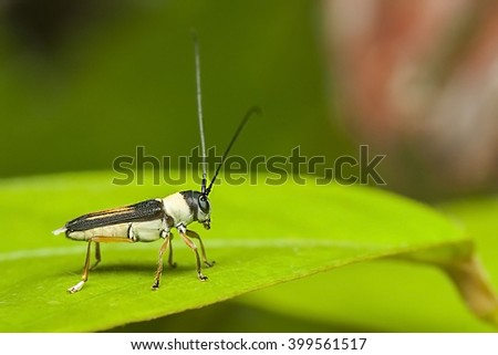 Small insect on leaf