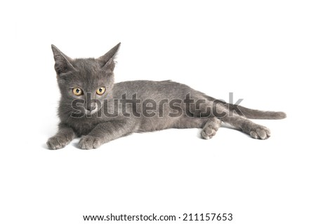 Small kitten,  litter cat isolated on white background