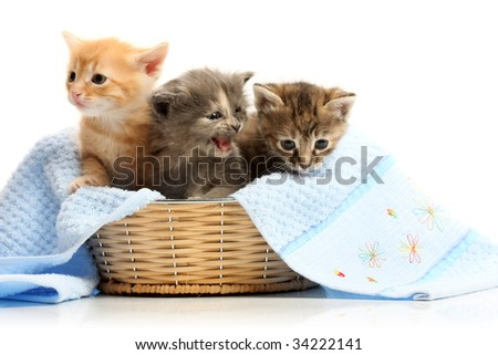 Small kittens in straw basket, isolated on white