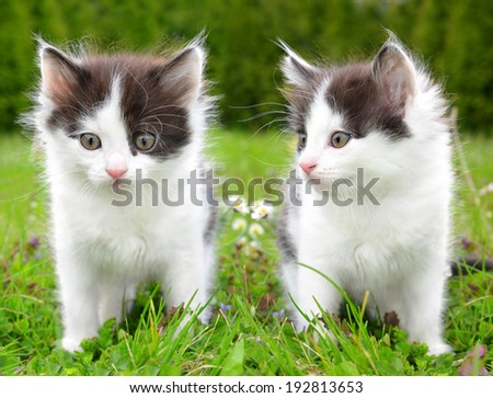 Small kittens in the grass