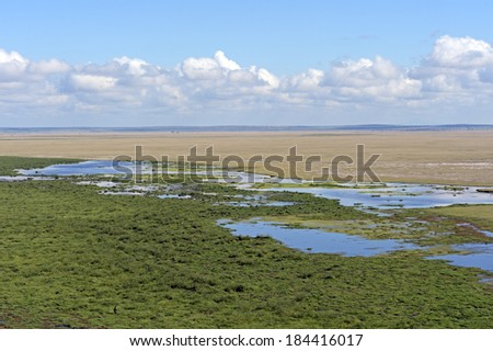 Small lake Amboseli National Park. Kenya. Africa
