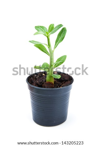 small ornamental plants in flowerpot on white background