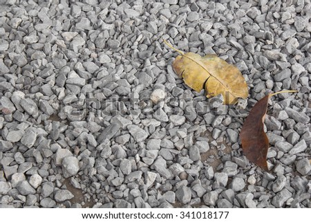 Small pebbles or stone and dry leaf for background.