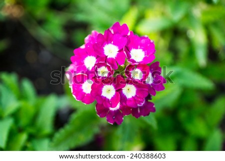 small pink flower in tropical garden,shallow focus