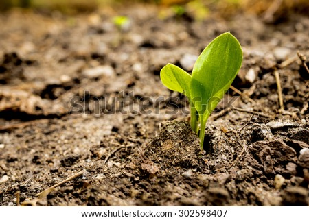 small plant is growing represent to hope, start or life