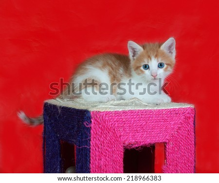 Small red and white kitten sitting on scratching post on red background