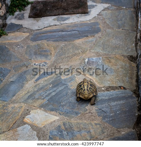 Small turtle in stone floor, natural background