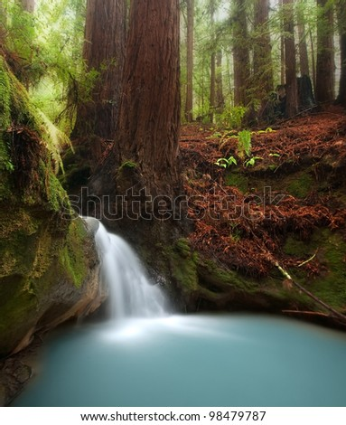 Berry Creek Falls Coastal Redwood Forest Stock Photo