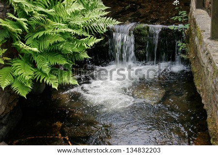 Small waterfall with green ferns in a water pond