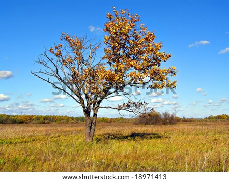 small yellow oak on field