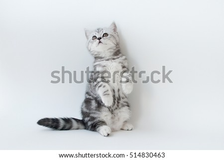 Small young cat with striped fur on a light background