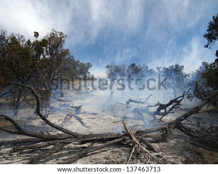Smoke rising from a partially burned forest.