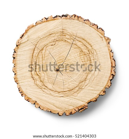 Smooth Cross Section Brown Tree Stump Slice With Age Rings. Shows Wood  Grain And Texture