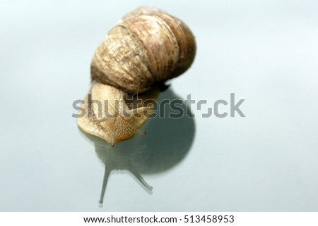 Snail crawling on the glass