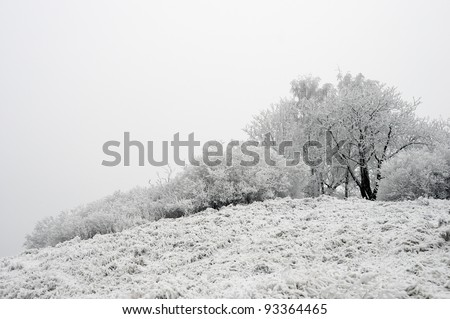 Snow-covered hill with trees