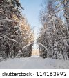 Snow covered path during winter wood - stock photo