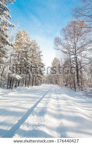 Snow-covered rural road in the forest