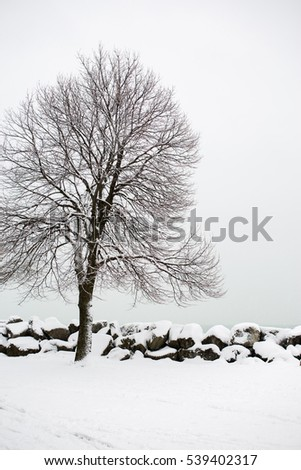 Snow covered tree at a city park
