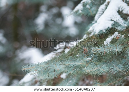 Snow-covered tree branch in forest