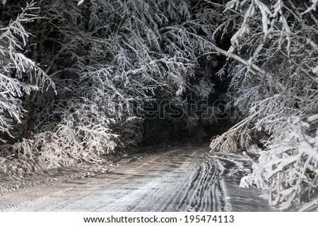 Snow falls on a winter road in the night forest