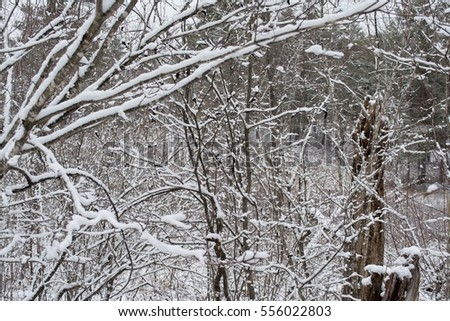 Snow laden branches.