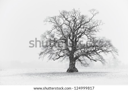 Snowy Tree Scene Black and White