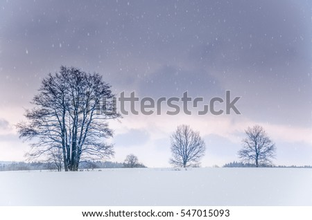 Snowy winter field with trees