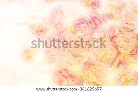 Soft blurred of roses flowers with soft bokeh in pastel tone for background.
