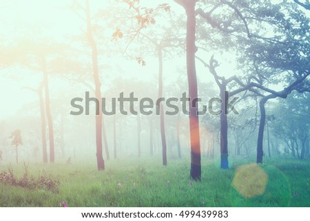 Soft focus of fresh sunrise in forest with sun flare. Vintage filtered.