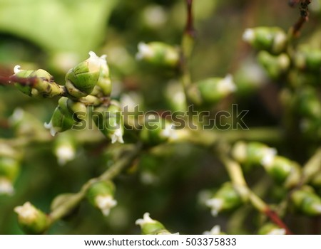 soft focus on green bunch with little green round young palm flowers seeds of decorative palm tree like red palm, betel palm, foxtail palm,  on the plant under natural sunlight and outdoor environment