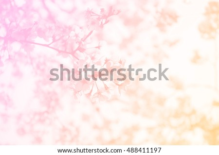Soft focus Tokyo Sakura in pink and yellow colored as background. Nature background. Flower backgroud. Spring background.