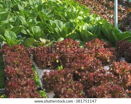 Rice crop stock photo 263631032 shutterstock for Soil less farming