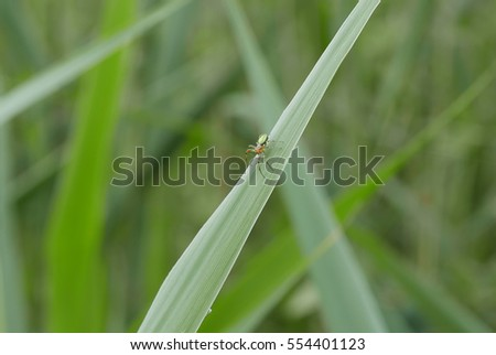 Solitary spider resting on blade of grass.