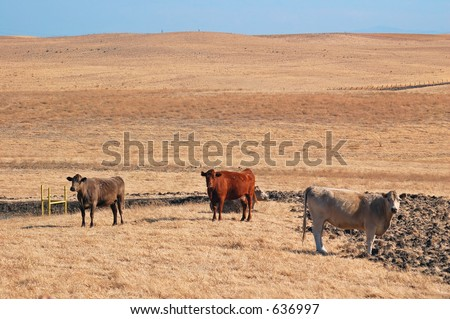 Some cattle on top of a hill, with the sky in the background.