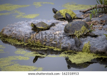 some turtles lying in the shore of a pond